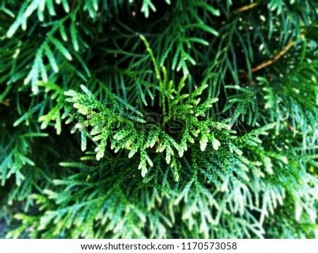 Background texture with juniper, cypress, plant, bush, green, evergreen, fir, conifer, needles, forest, fern and horsetail. #1170573058