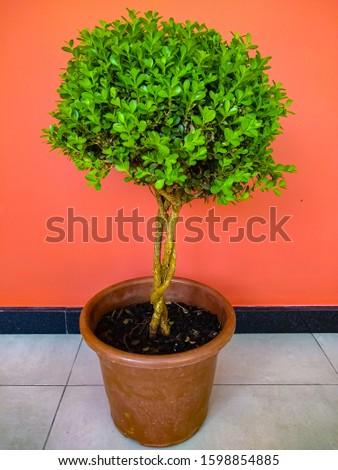 background tree botany decoration bonsai