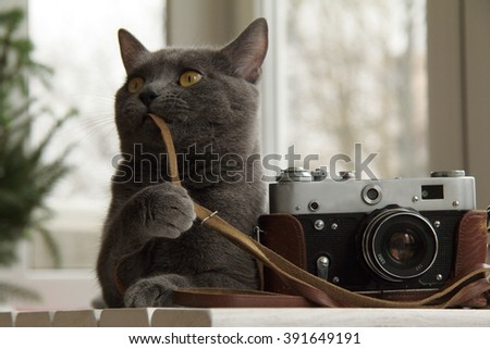 background with a cat that sets up an old camera/Cat photographer or fine-tuning