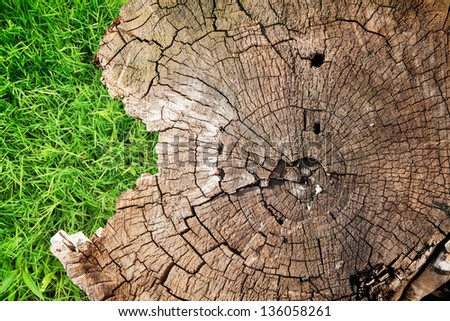 background with a stump and grass