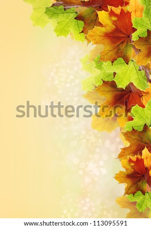 Background with autumn leaves in warm tones