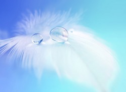 Background with bird feather. White light airy soft feather with transparent drops of water on  turquoise background. Delicate dreamy exquisite artistic image of the purity and fragility of nature