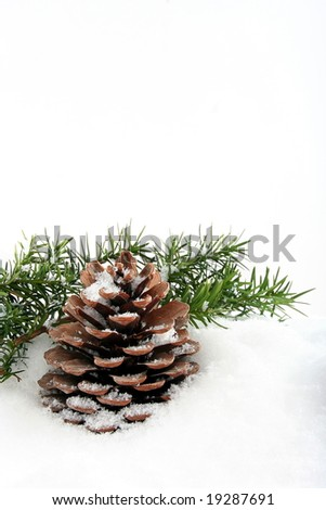 Background with branch and cone on white snow