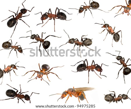 background with brown forest ants