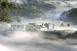 Background with dense fog and magic light at the sunrise. The coffee farm and small houses in brilliant sunshine