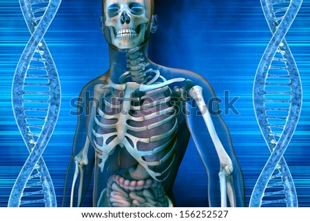 background with DNA molecule and anatomy men