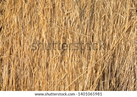 background with dry branches of wheat aligned as a pattern on the ground #1401065981