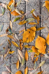 Background with fallen autumn yellow leaves on the paving slabs