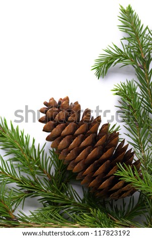 Background with fir and cone - stock photo