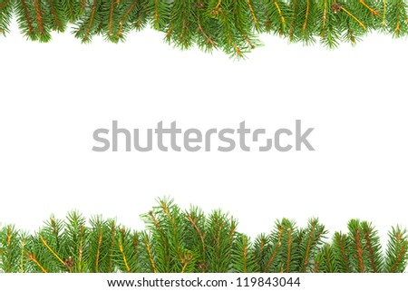 Background with fir isolated on white background