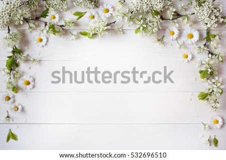 Background with flowering branches of plums, cherries and daisies #532696510