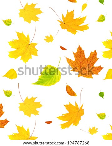 Background with flying autumn leaves of a birch, maple and barberry. Isolated on white background