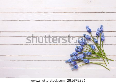 Background with fresh  blue muscaries flowers on white painted wooden planks. Selective focus. Place for text.