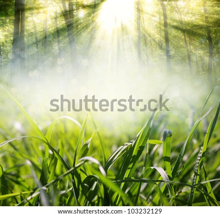 background with grass in the meadow