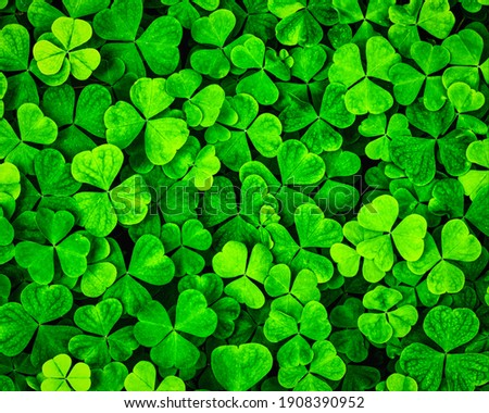 Background with green clover leaves for Saint Patrick's day. Shamrock as a symbol of good luck.  Сток-фото ©