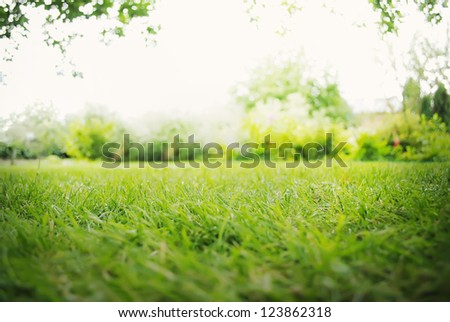 Background with Green Summer Landscape #123862318