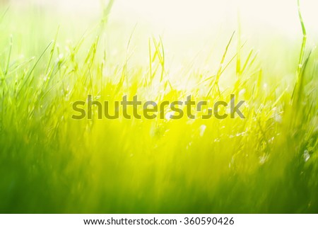 Background with Green Summer Landscape. Grass in Yellow Sunlight  St Patrick Day  #360590426