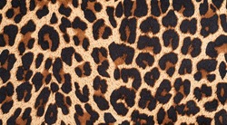 background with leopard texture, close up