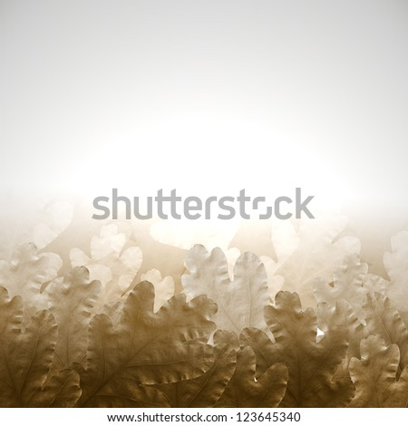 background with oak leaves,Dried oak leaves,Autumn picture with oak leaves