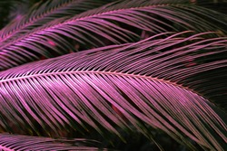 Background with palm leaves in botanical garden.