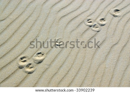 background with paw prints of a lonely hare in the sand