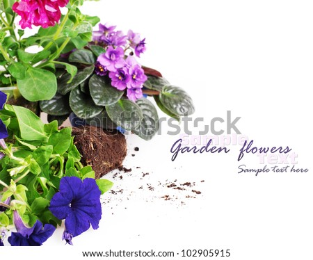 Background with petunia and violet flowers