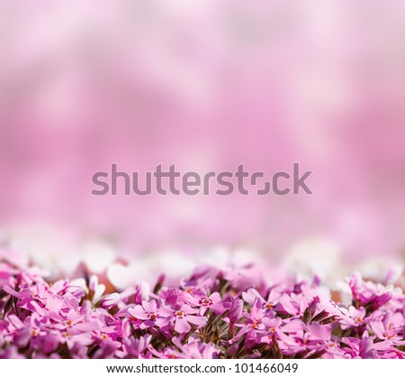 background with pink blossoming flowers with space for text - stock photo