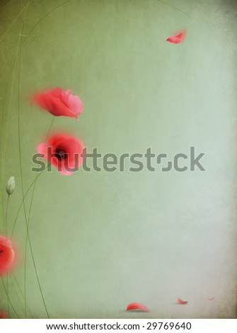Background with poppies for cards