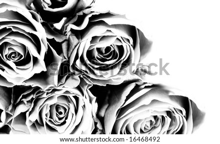 close up of black and white rose wallpaper wallpaper, roses, decorating