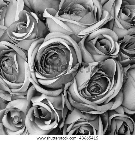 black and white art wallpaper. lack and white rose wallpaper