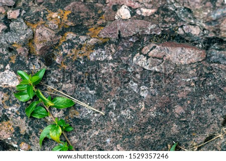 Background with selective focus. Background with selective focus. Backdrop of green plant life growing in stone. Natural background with copy space for sustainable and responsible lifestyle concept #1529357246