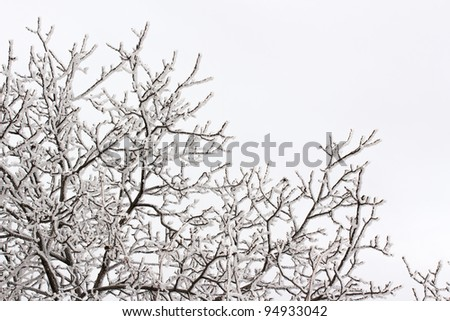 background with snow on branches