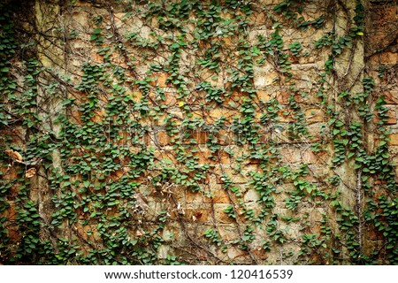 Background with vine wall.
