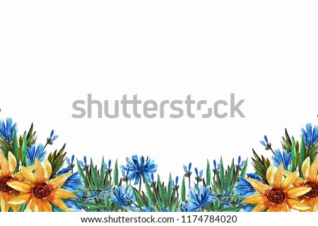 Background with wildflowers, spring blossom (flowering), chicory, sunflower, green leaves on a white background. Watercolor