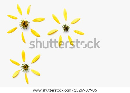 background with yellow petals, yellow flower, yellow petals