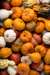 Backgrounds and textures: a lot of multicolor pumpkins, seasonal autumn decorative background