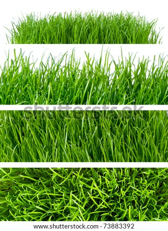 backgrounds of spring grass isolated
