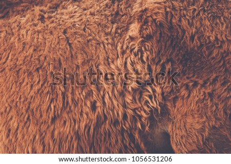 Backgrounds Textures close up Horsehair Brown Long hair , color vintage style #1056531206