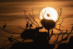 Backlight stork nests watching the sunset
