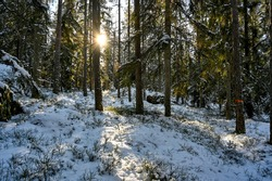 backlight through cold and snowy forest in Sweden