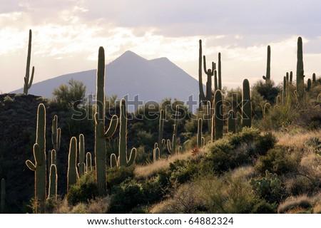 Backlit Desert Scene