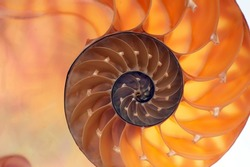 Backlit inside of nautilus shell