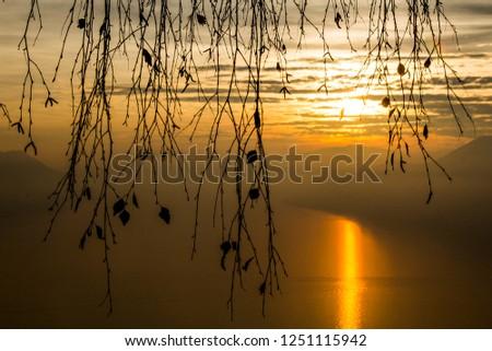 Backlit Leaves at sunset