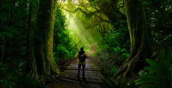 Backpacker in tropical rain forest