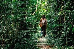backside of male travelers walking through jungle. a man hiking in forest dense. concept of Travel relax, Holiday and vacation.