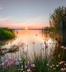 Backwater on the Chudskoy lake