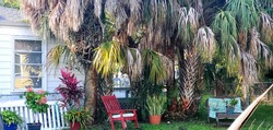 Backyard garden area with palm trees and different kinds of plants with a bench, red rocking chair and table.