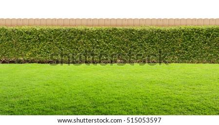 Backyard isolated #515053597