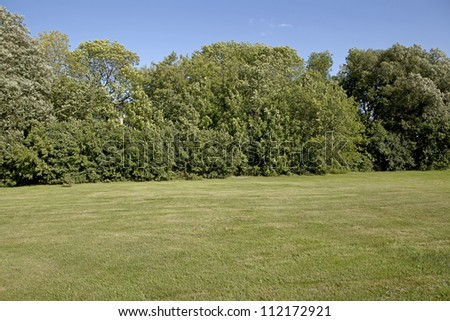 Backyard lawn surrounded by trees