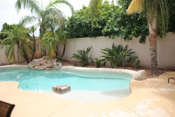 backyard pool oasis with palm trees